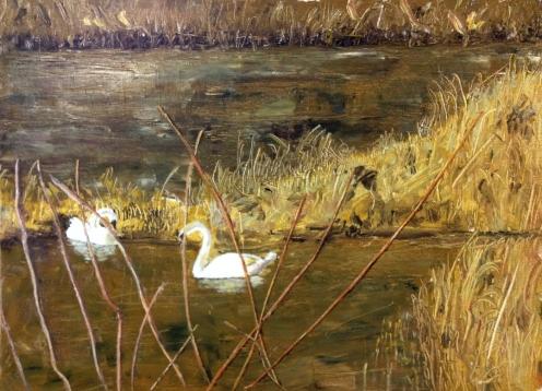 swan pond update