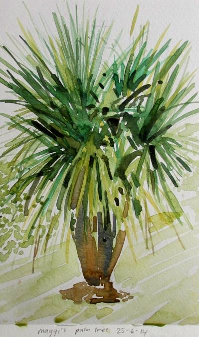 Maggi's palm tree 25-6-14