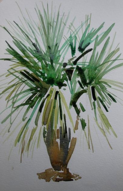 maggi's palm tree