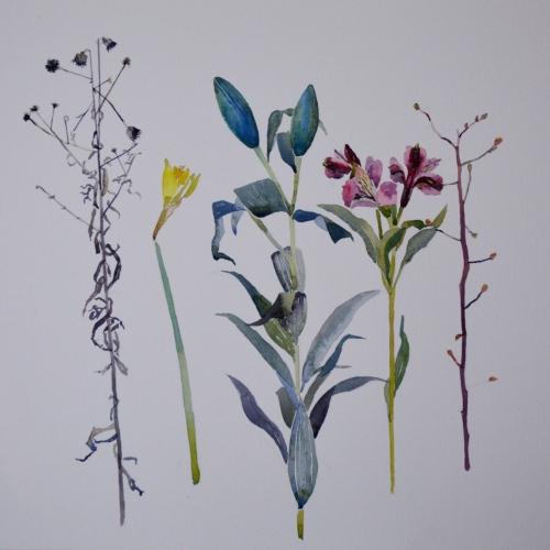 watercolour-flowers-sun-19-feb